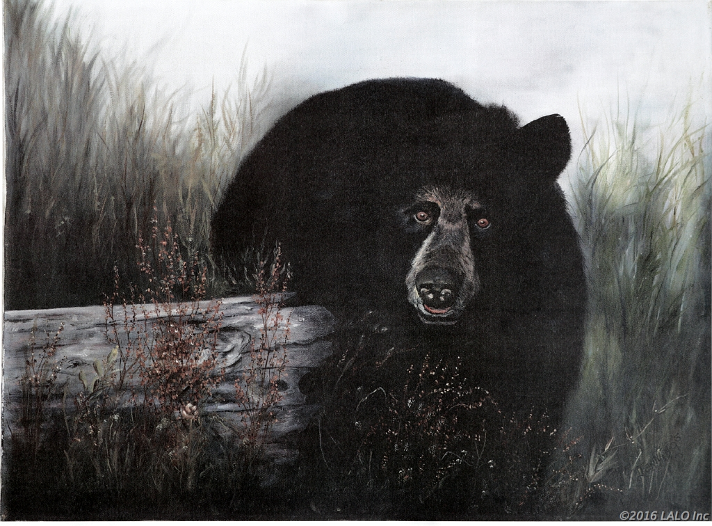 Black Bear by Barbara E. Jennings