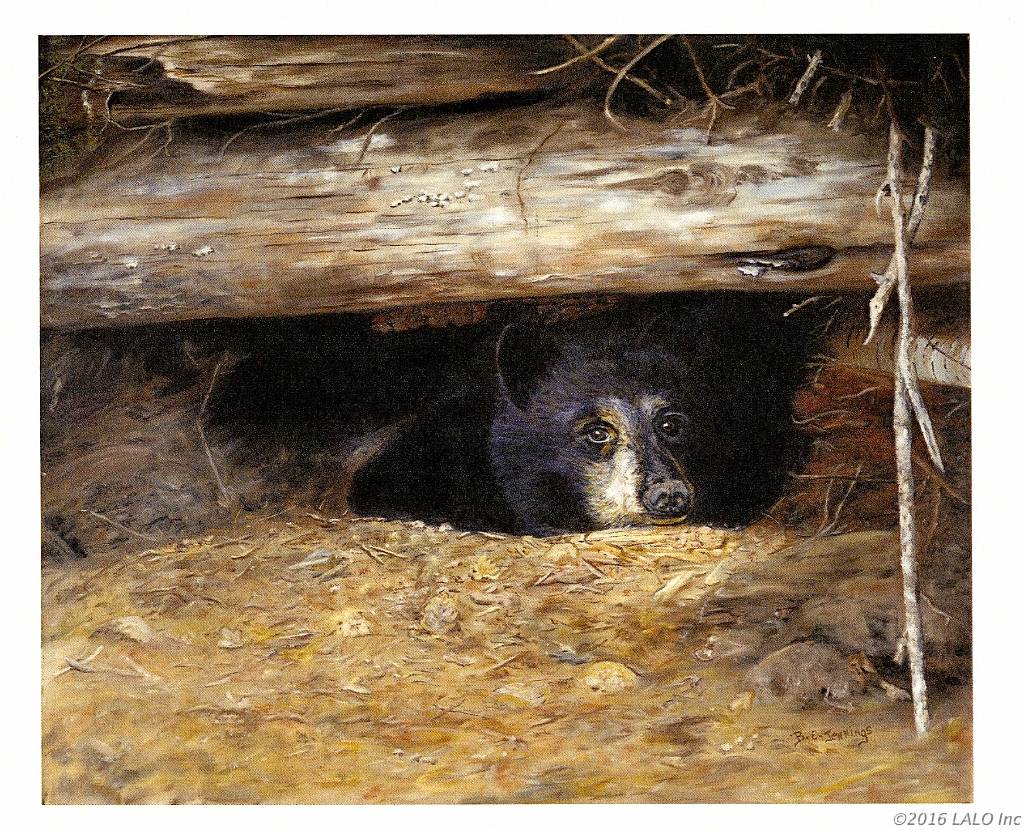 Peeking Bear by Barbara E. Jennings