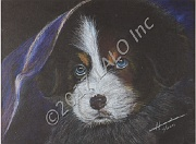 Bernese Mountain Puppy by Hannia Smith