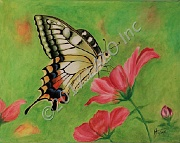 Spring Butterfly by Hannia Smith